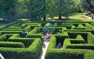 Живая изгородь из самшита: схема посадки