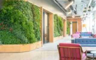 Озеленение помещений: польза, виды и топ 10 лучших растений для дома и офиса