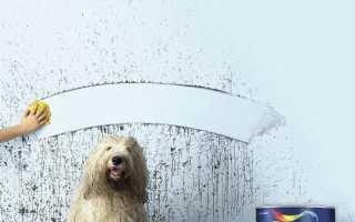 Краска Dulux: палитра цветов, блестящий белый, моющиеся составы для обоев, кухни и ванной, характеристики и отзывы