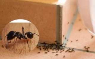 Муравьи в доме- как избавиться своими силами