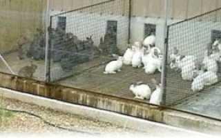 Вольеры для кроликов своими руками: пошаговая инструкция